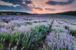Виолетов пейзаж