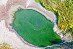 Птици в зелено езерце