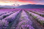 Виолетови сънища