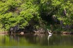 Чапла в река