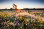 Цветчета и лавандула