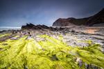 Зелени водорасли