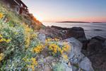 Жълти цветя по Созополския бряг