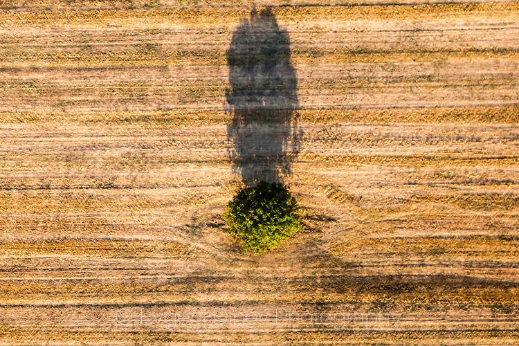 Сянка на дърво