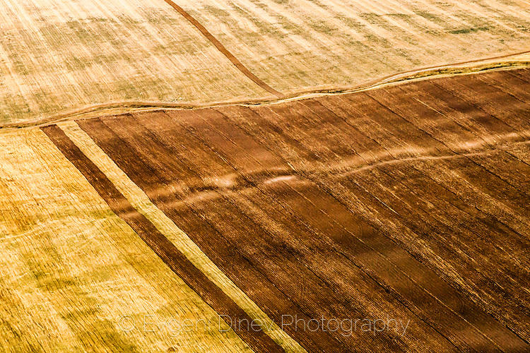 Картина с лятно поле