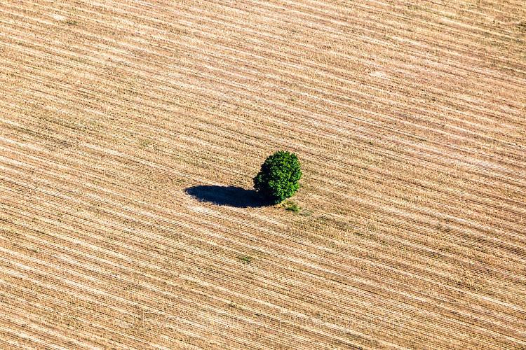 Дърво в средата на поле