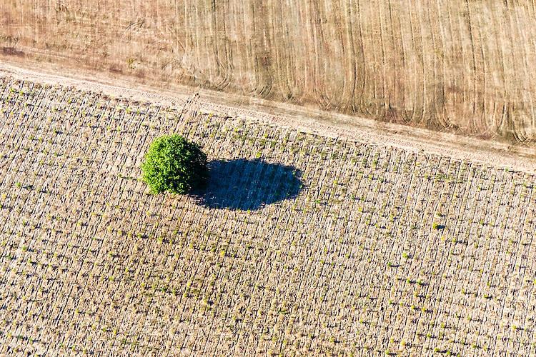Дърво в поле