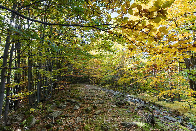 Есенна гора по пътя към хижа Амбарица