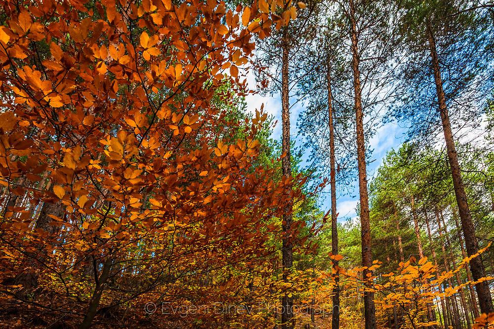 Пъстра гора