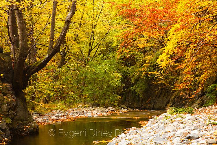 Есен в резерват Стара Река