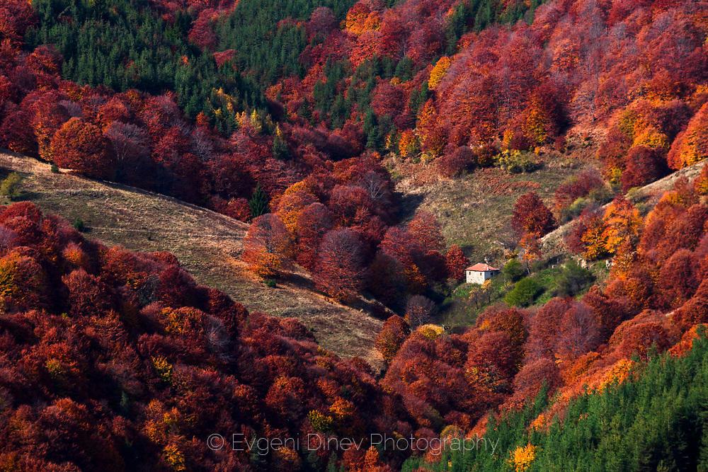 Истинска есен
