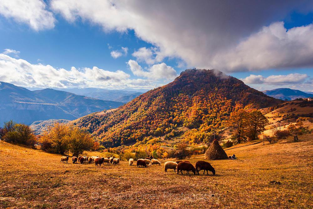 Пастиря си почива, докато стадото пасе