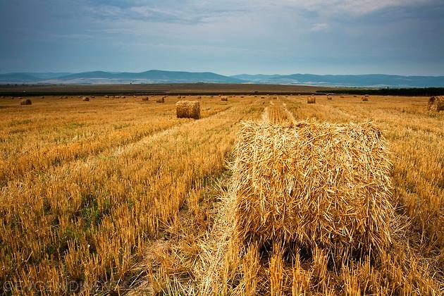 Житото прибрано, сеното събрано