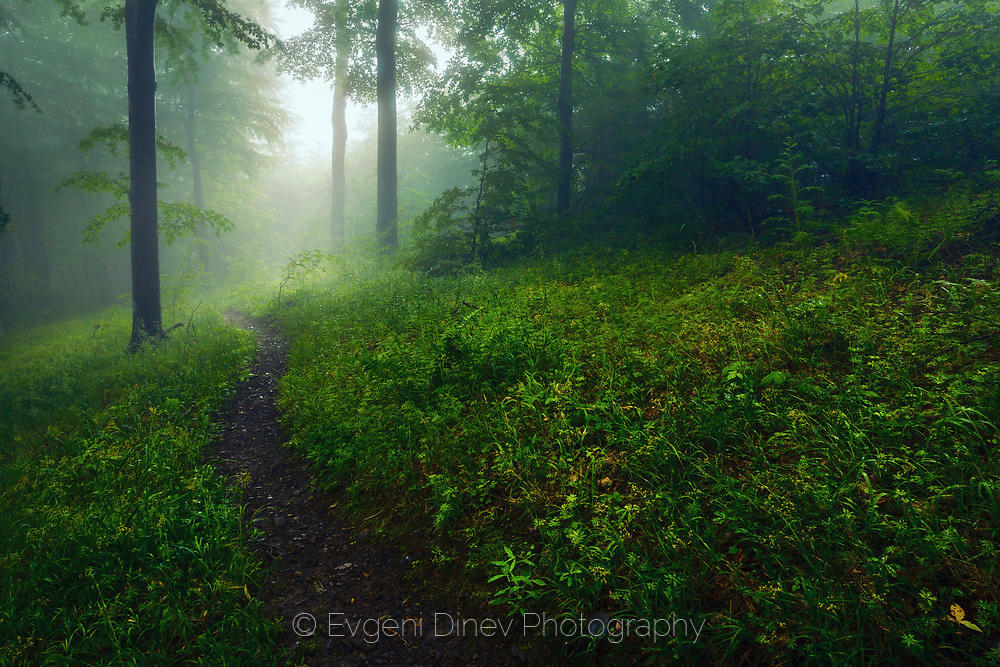 Пътека в тъмна гора