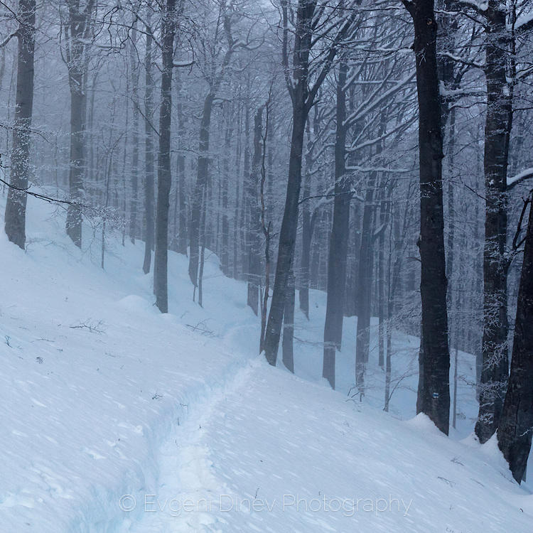Пъртина през заснежена гора в мъгла по свечеряване