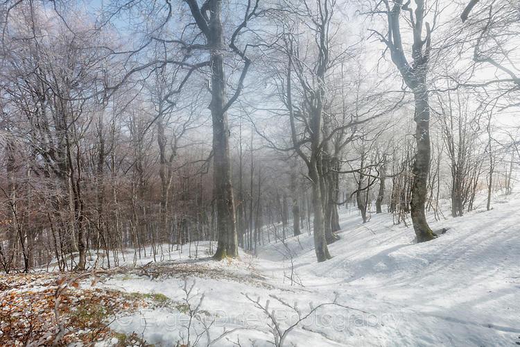 Мъгливо-слънчева зимна гора