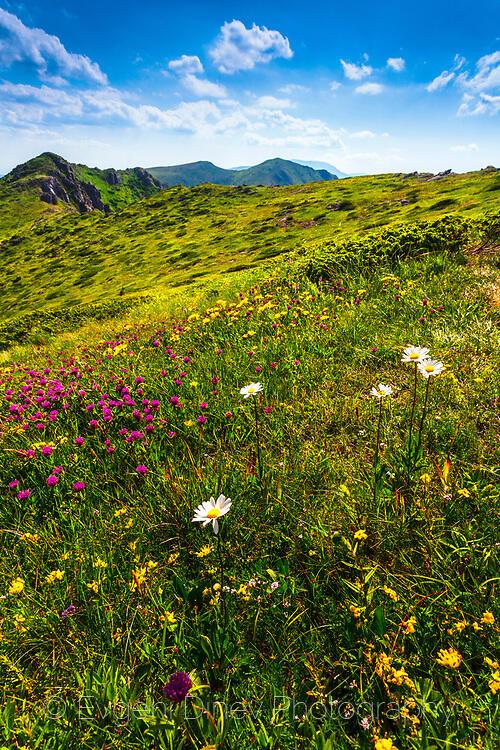 Старопланинска поляна с диви цветчета