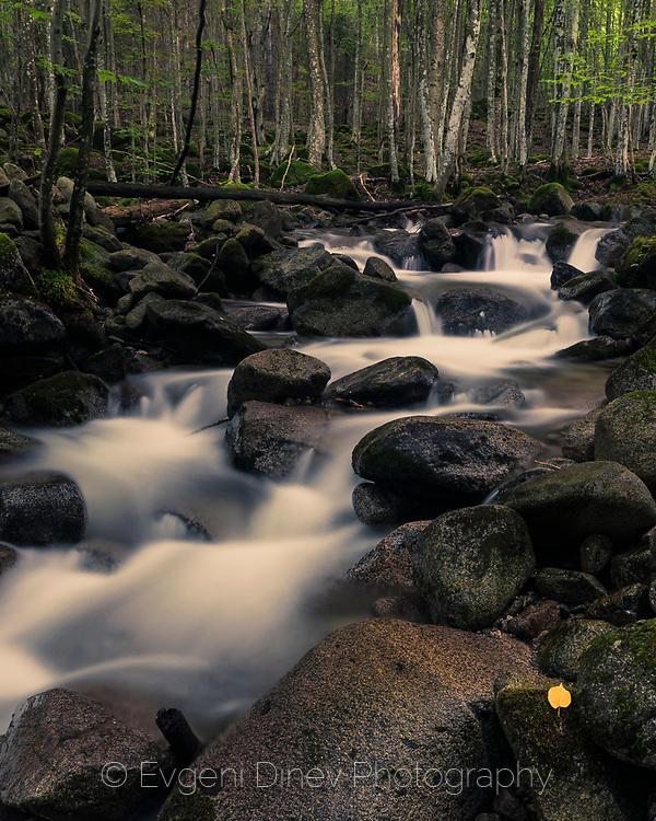 Жълт лист до буйна река