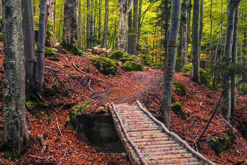 Дървено мостче над река в гората през есента