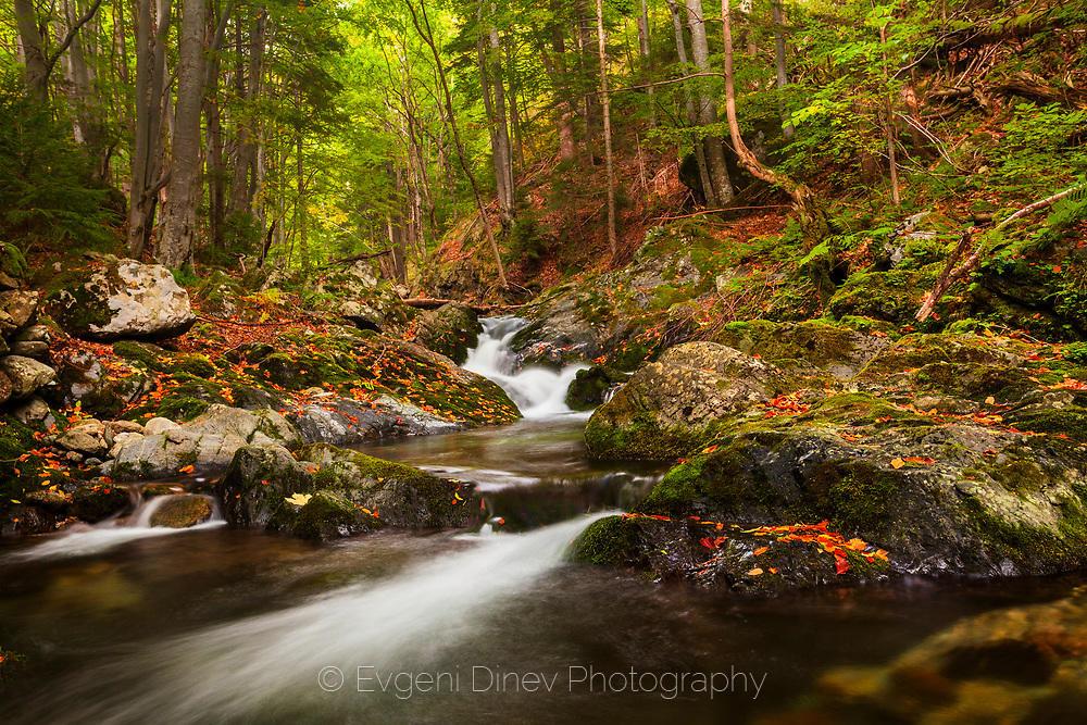 Резерват Стара Река през есента
