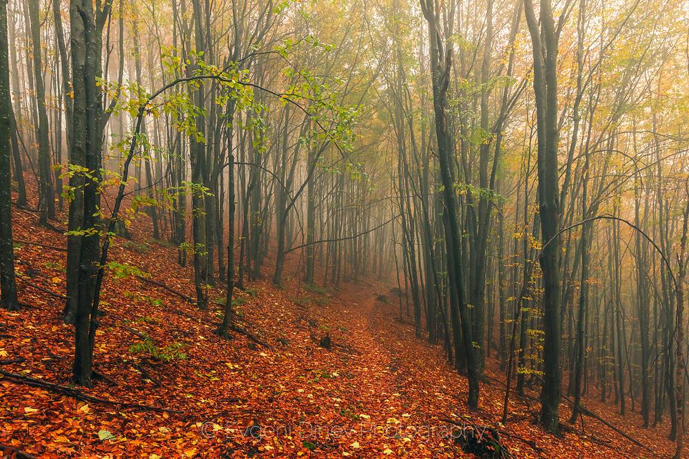 Есенна букова гора