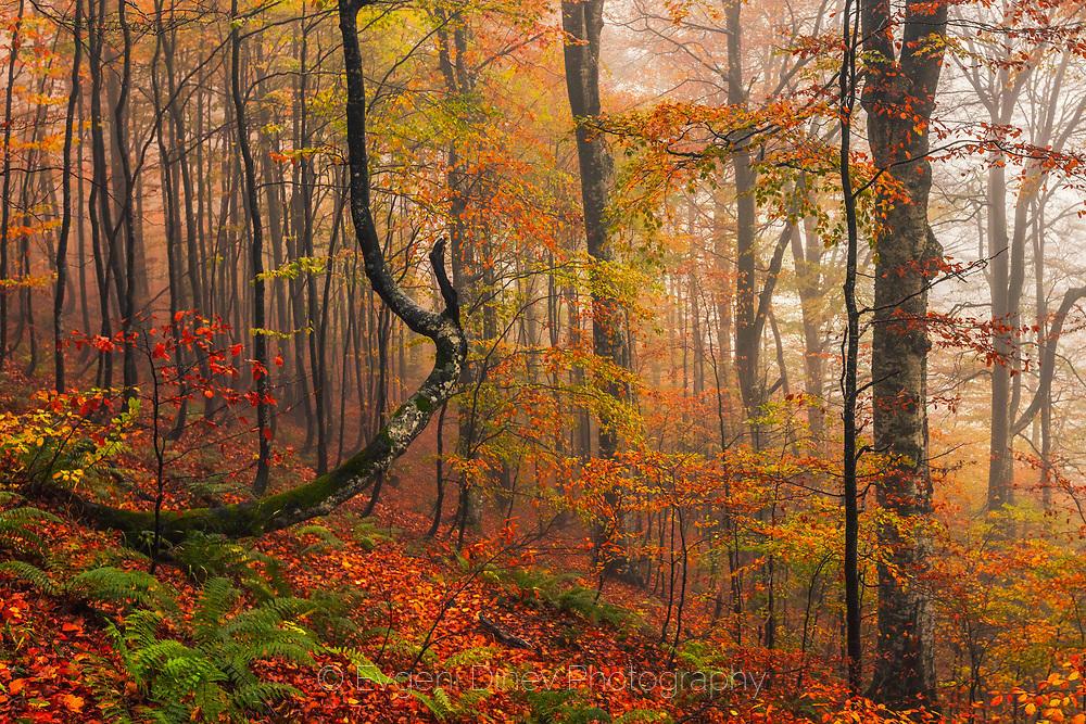 Есенна природна картина