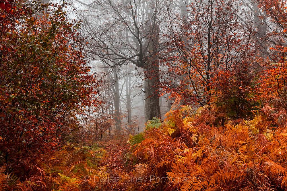 Колоси в мъглата