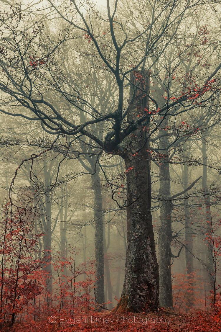 Гигант насред гората