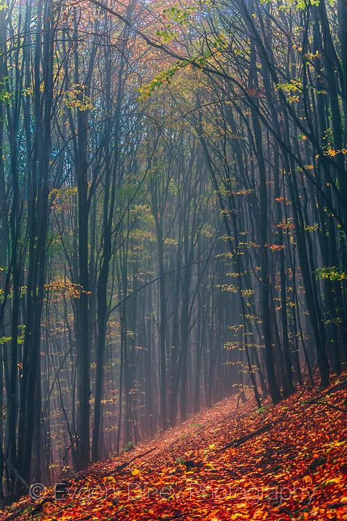 Есен в резерват Козя стена