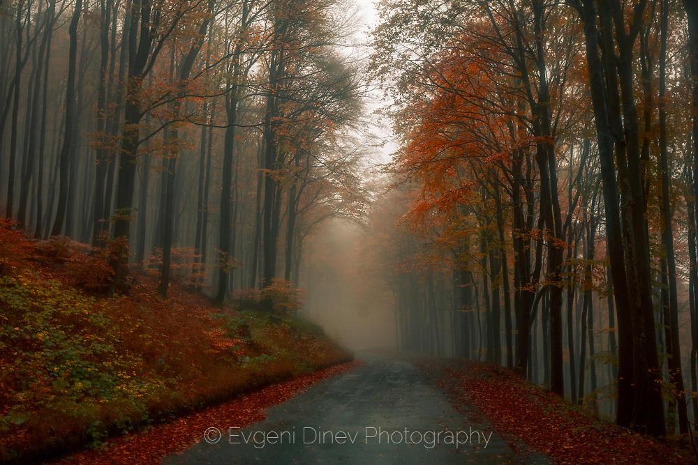 Мъглив есенен път в гора