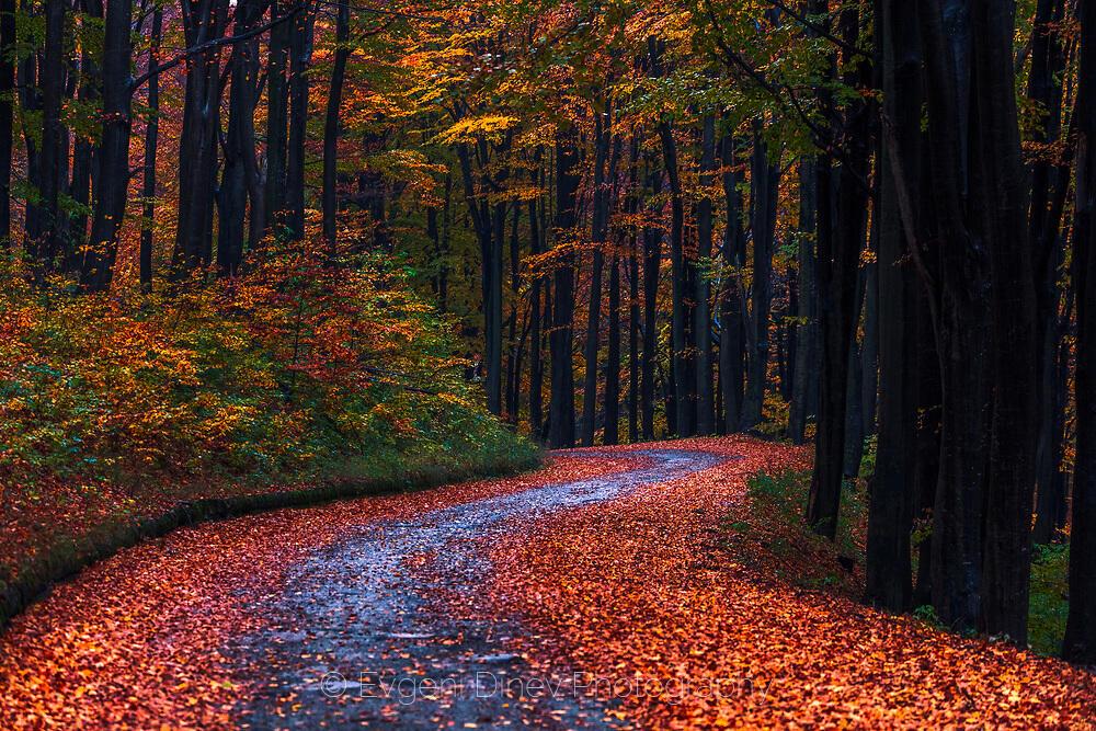 Път покрит с есенни листа