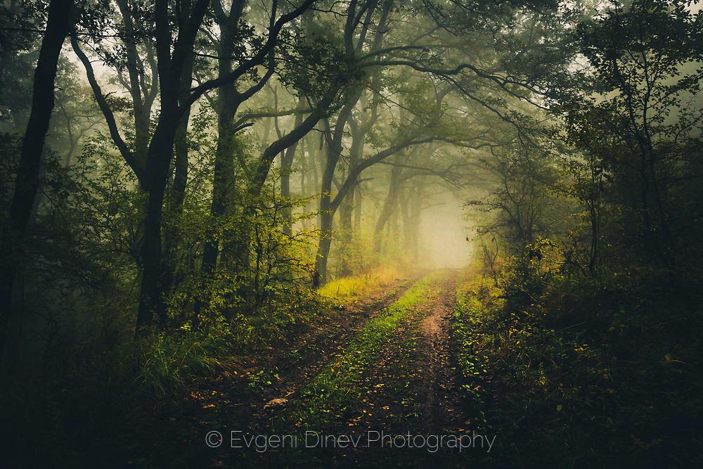 Тунел от дървета