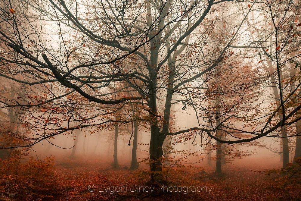 Пазителят на есента
