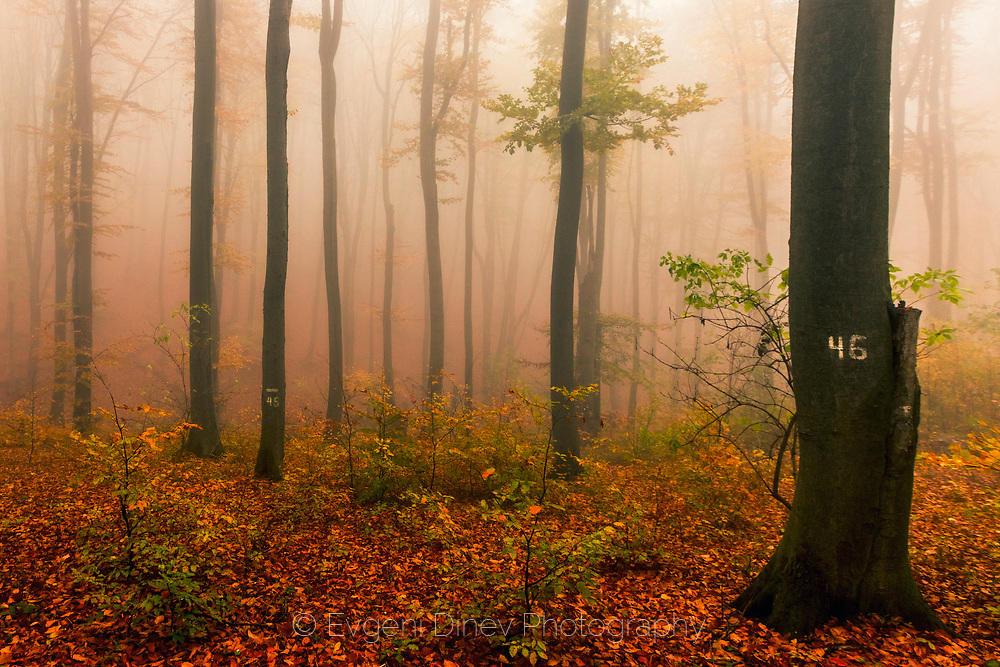 Осъдени дървета