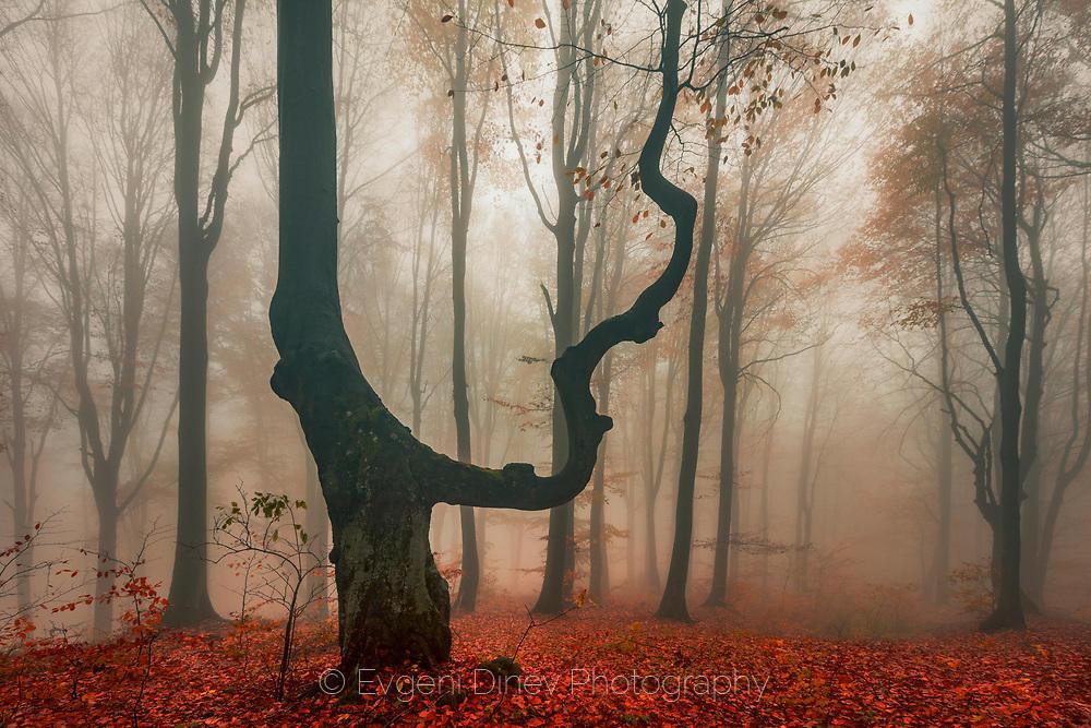Роден през есента