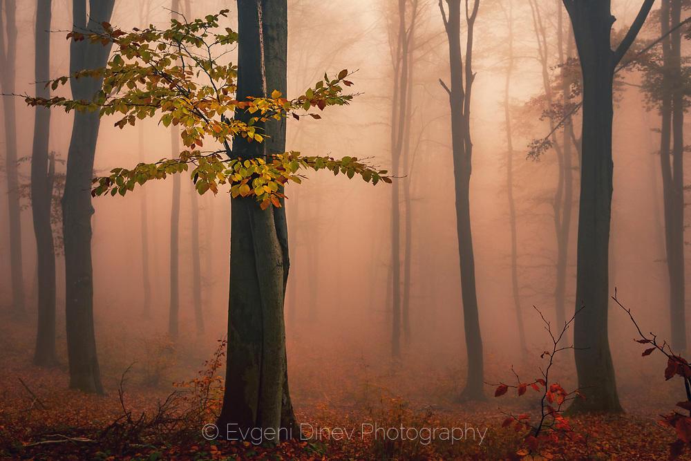 Есенни трепети