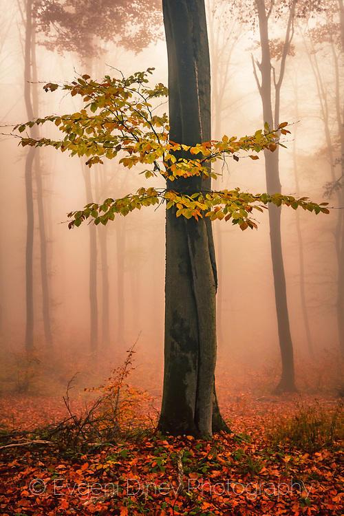 Повелителят на есента