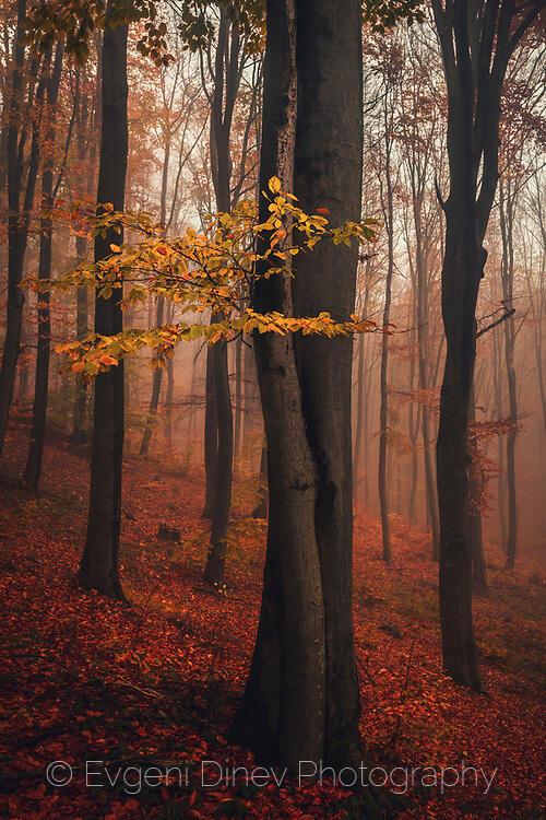 Есенни трели