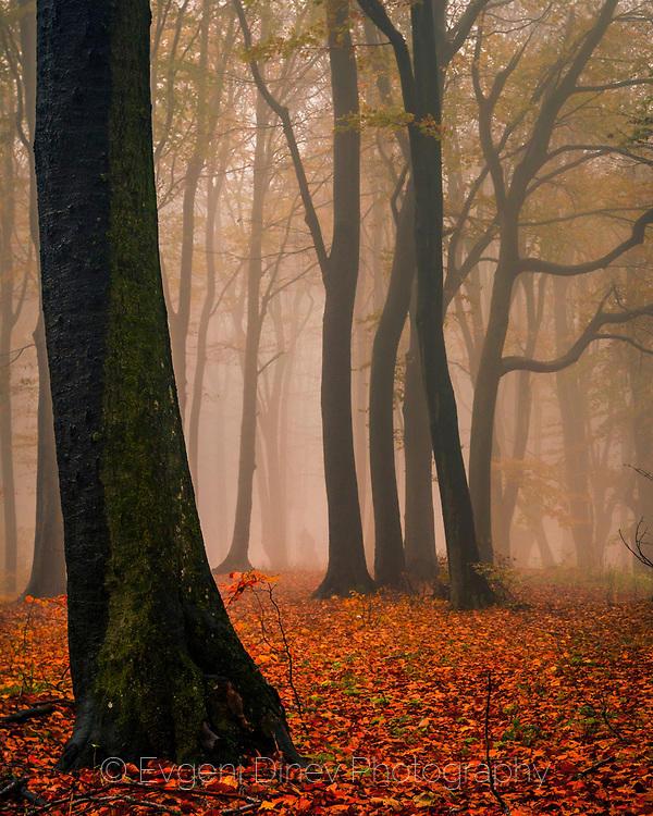 Исполини в мъглата