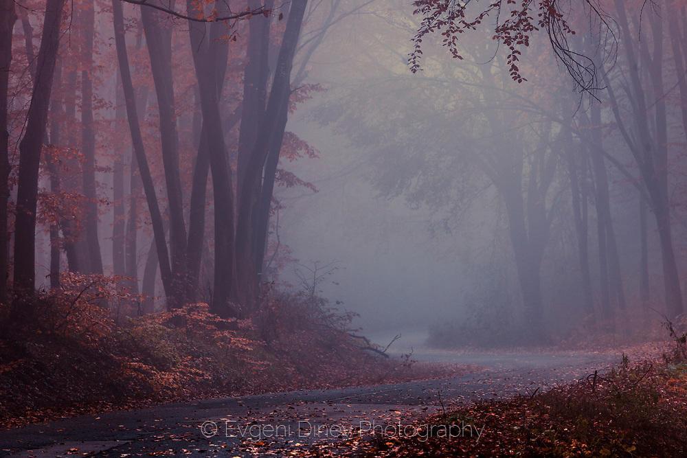 Път през мъглива есенна гора
