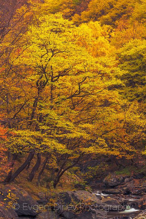 Разкошна есенна гора