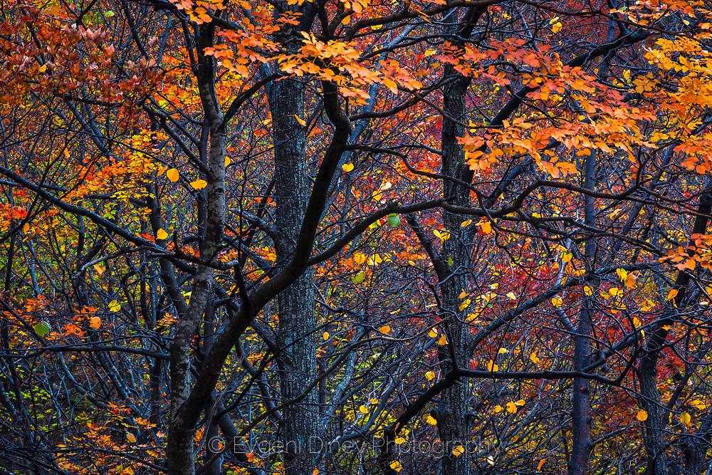 Есенни балкански букаци