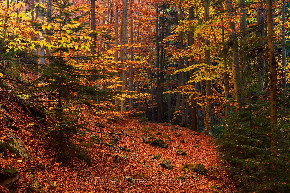 Килим от червена шума