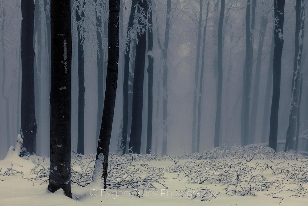 Смълчана гора