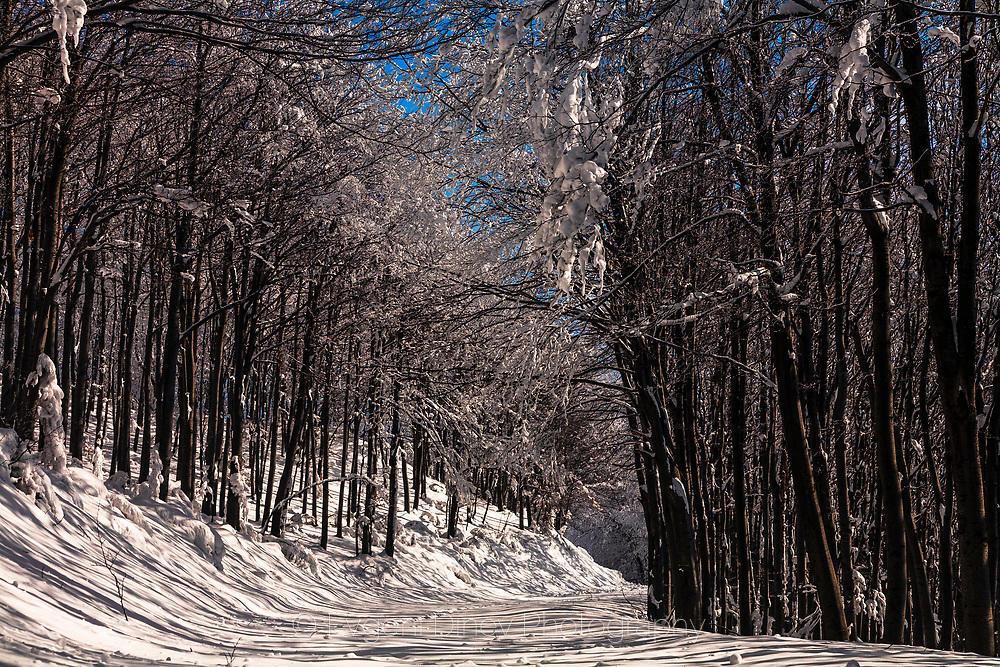 Път през слънчева заснежена гора