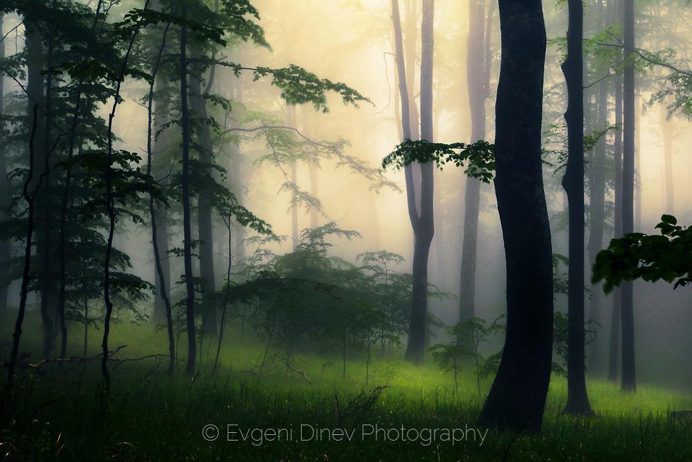 Тайнствена гора