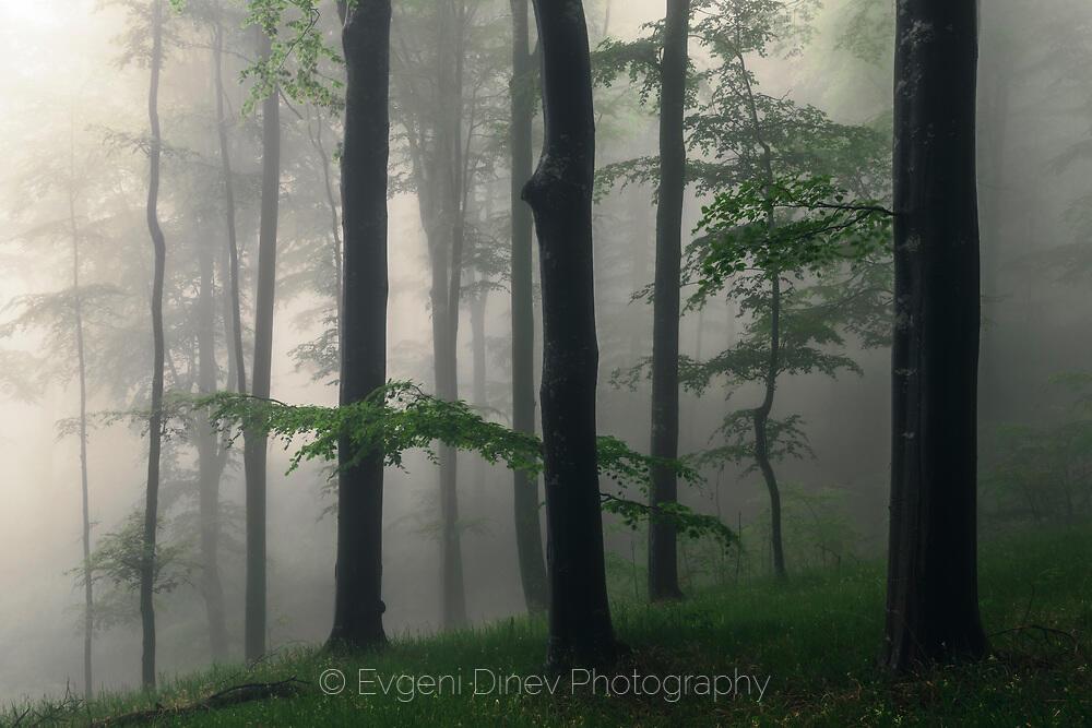 Мистична гора