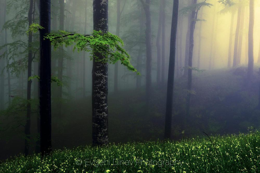 Гора потънала в мъгла
