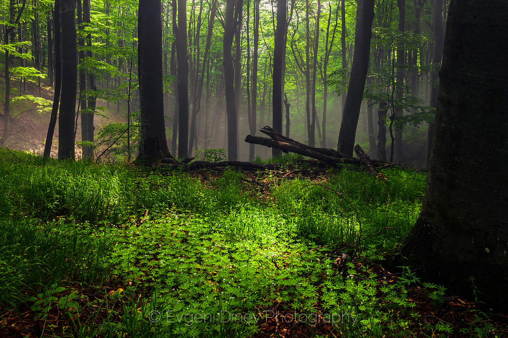 Петно светлина в тъмна гора