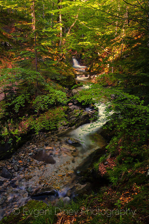 Живописна река в гората